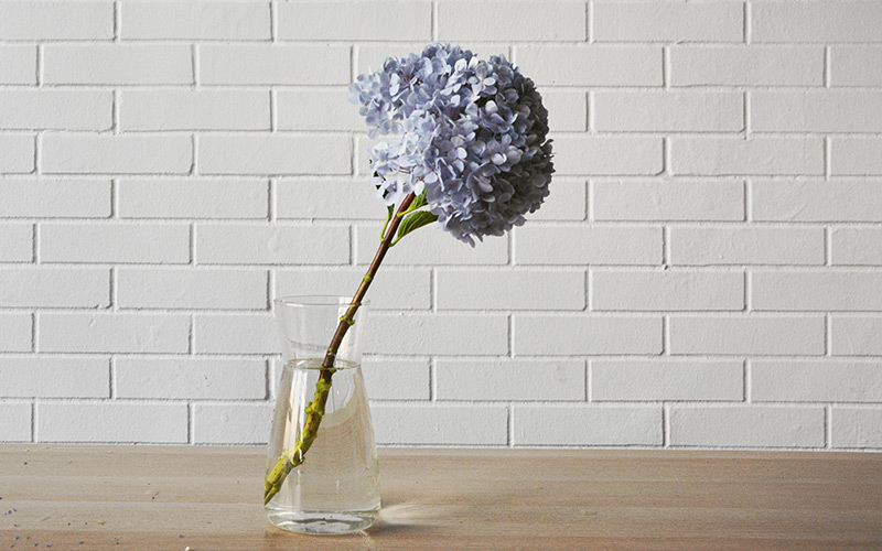 blog-hydrangea-water