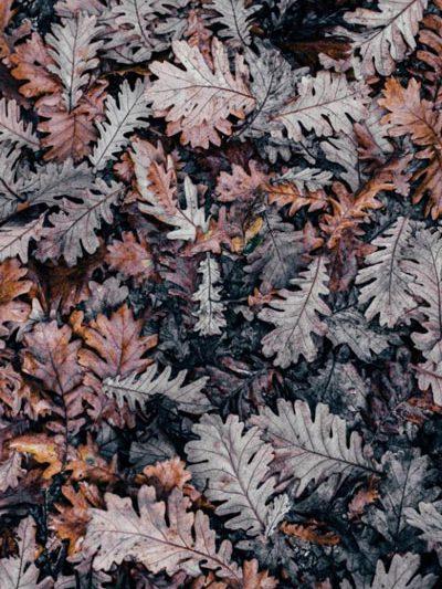 blog-sep2019-autumn-annie-spratt