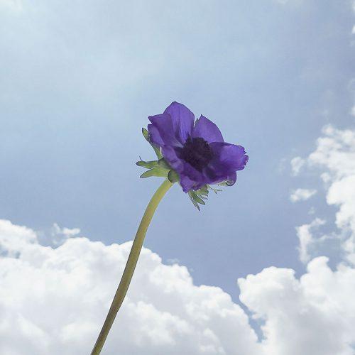 blog-040120-pantone-classic-blue-a-anemone